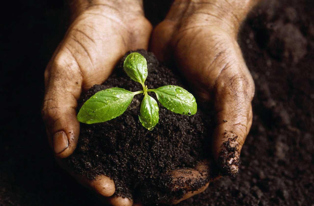 Trillion Trees Planting