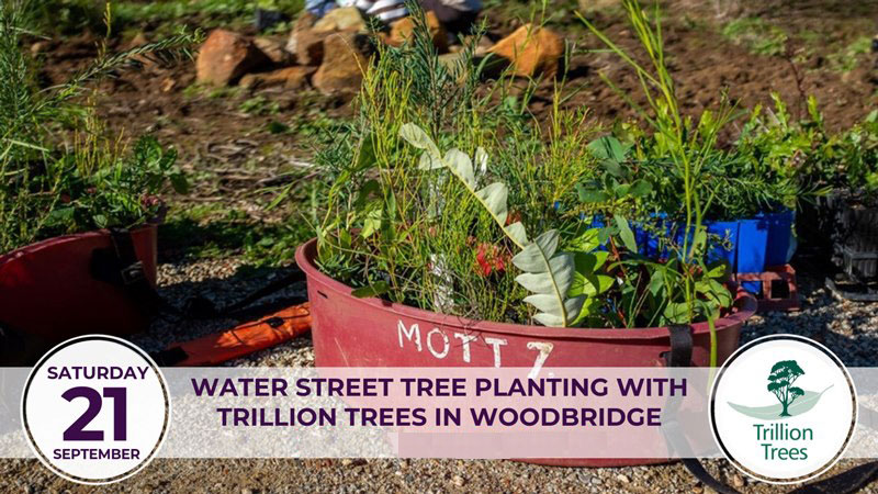 Water Street Planting with Trillion Trees