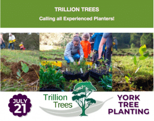 York Tree Planting with Trillion Trees @ York Tree Planting - meet at Trillion Trees | Hazelmere | Western Australia | Australia