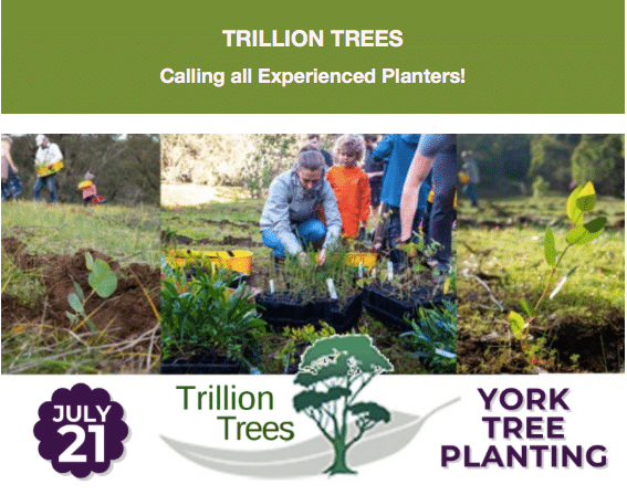 York Planting with Trillion Trees