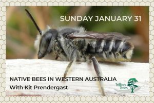 Native Bees in Western Australia with Kit Prendergast @ Trillion Trees Studio | Hazelmere | Western Australia | Australia